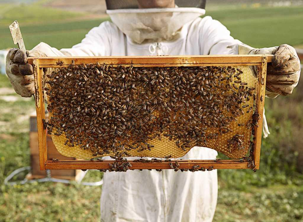 Как оформляется сертификация меда