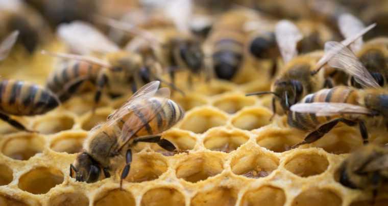 Сертификация меда и продуктов пчеловодства