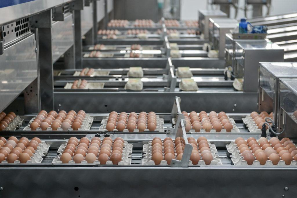 декларация соответствия на яйцо куриное