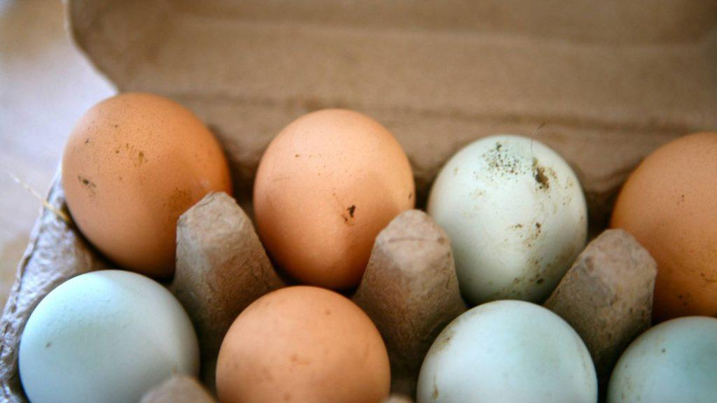 декларация на яйца